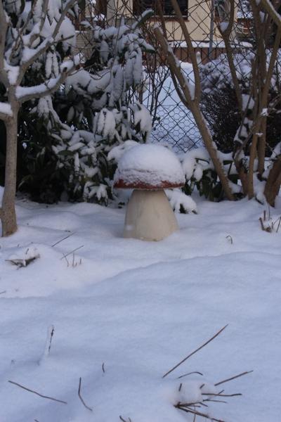 Pilz im Schnee IMG_0943