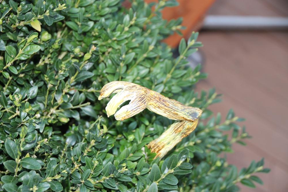 Monster im Buchsbaum IMG_3641